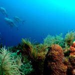 Resort Scuba Diving