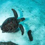 Reef Encounter - Turtle