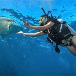 scuba diving with Maori Wrasse