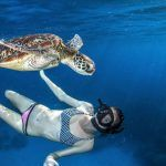 Reef Encounter - Snorkel with turtle